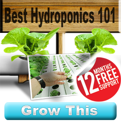 how to grow crops hydroponically hydroponics