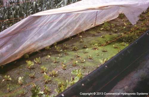 nutrient flow rate nft hydroponics