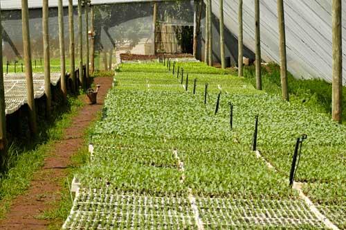 nursery irrigation design
