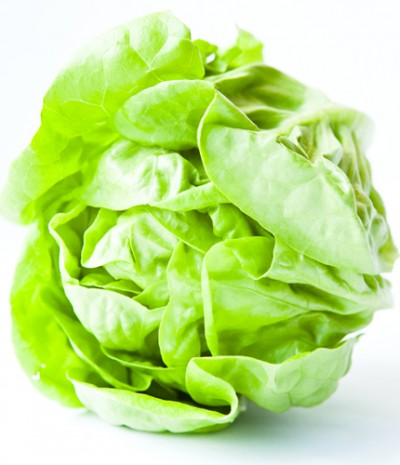 lettuce mature management harvest predict head butter crisp iceberg hydroponics greenhouse