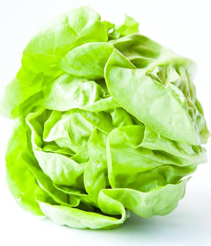 lettuce mature management harvest predict head butter crisp iceberg hydroponics greenhouse