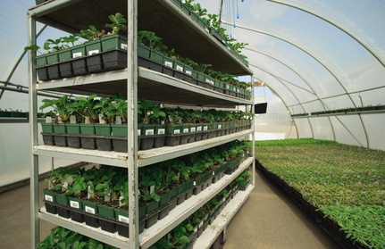 commercial seedlings nursery trays seedtray greenhouse