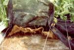 heating roots hydroponics nft