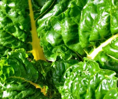 Hydroponically-producted-spinach