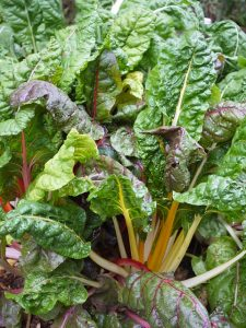 swiss chard spinach