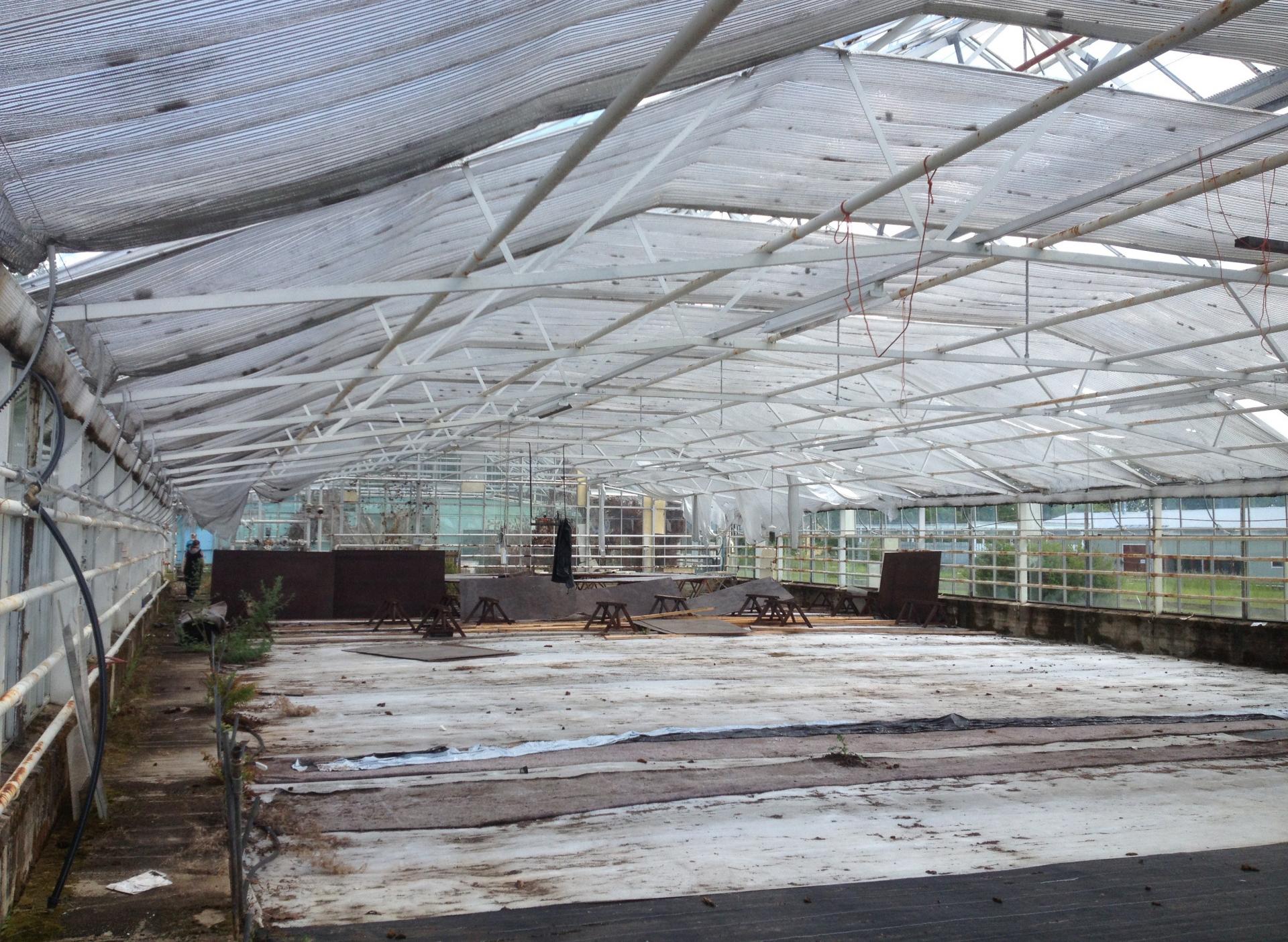 Economic feasibility of hydroponics