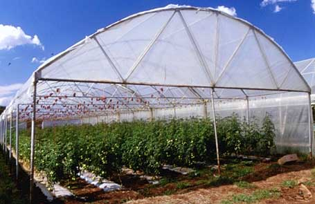 greenhouse structure single span tunnel plastic cladding