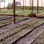 nft hydroponics gullies channels lettuce shade cloth