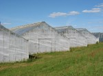 Greenhouse structure - what works
