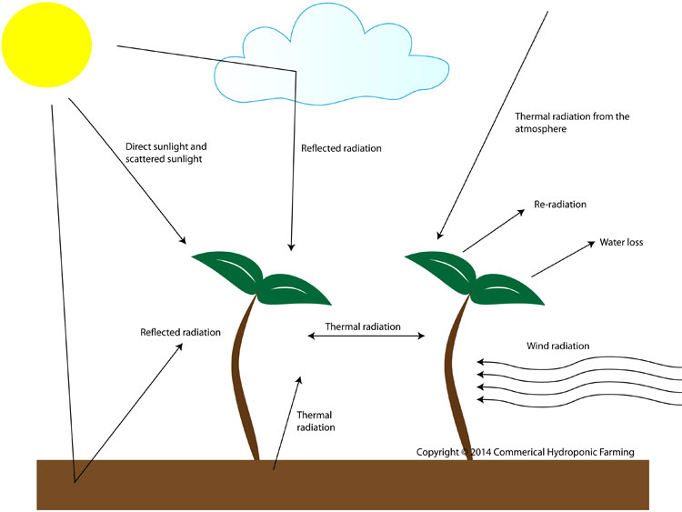 effects superphosphate plants and environment New zealand journal of crop and effect of bioinoculants and superphosphate fertilizer on the effects of plant-growth-promoting rhizobacteria and.