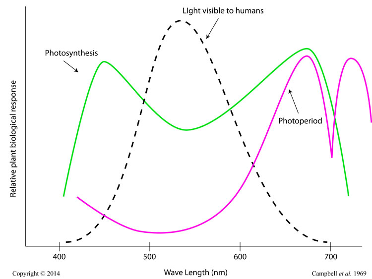 greenhouse light sensitivity photosynhesis photoperiod