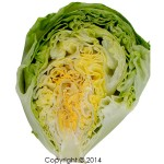 lettuce head formation