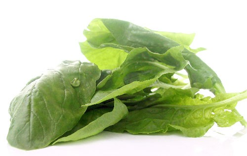 Hydroponically-producted-baby-spinach