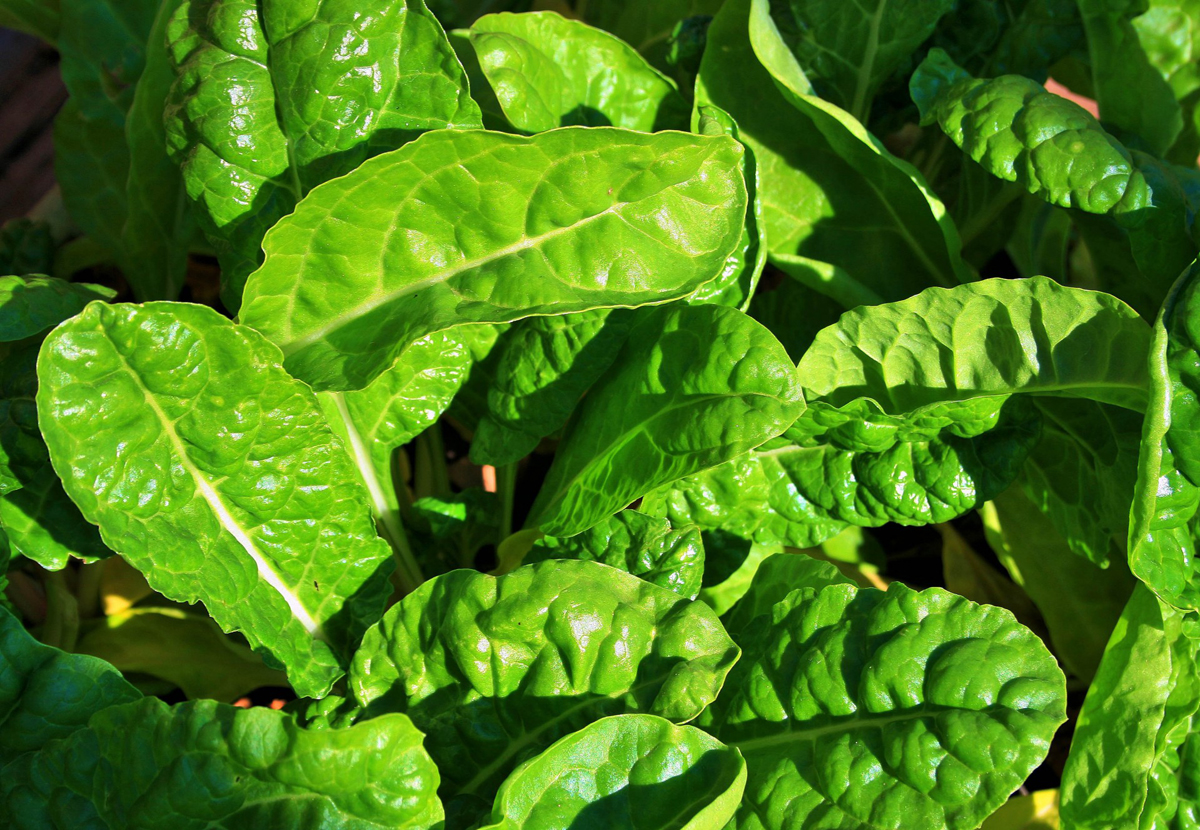 Commercial Hydroponic Farming | How to grow spinach