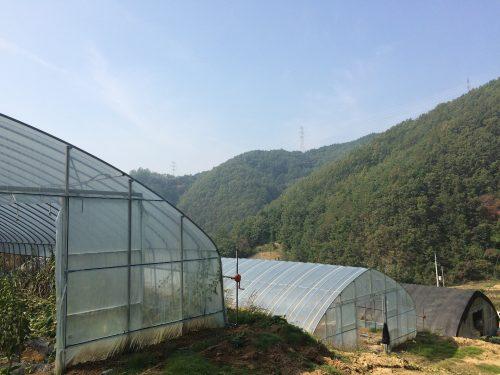 greenhouse locatoin